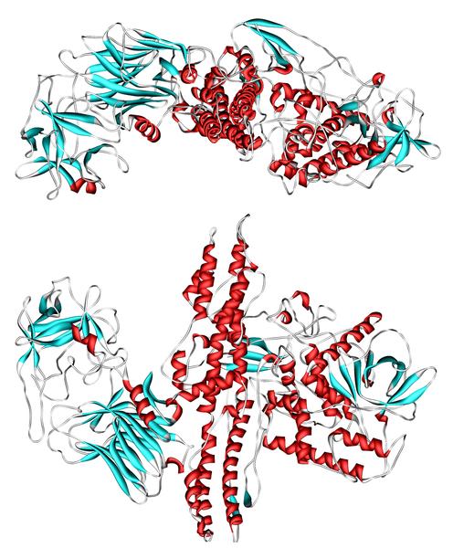 496px-botulinum_toxin_3bta