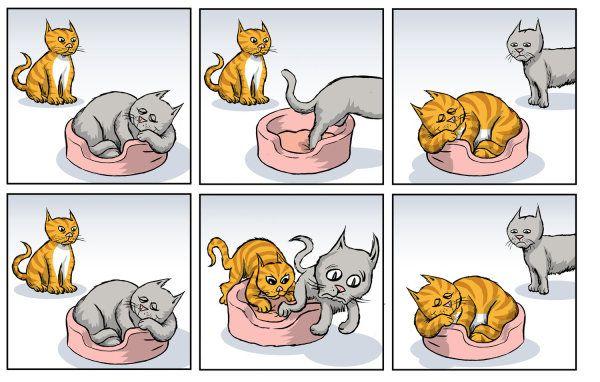 gatinhos sn1 sn2
